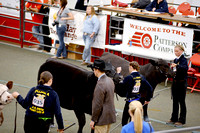Beef Breed Showmanship Camera 1