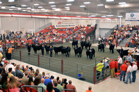 Mosaic Steer Sale