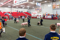 Youth Swine Showmanship