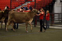 Dairy Adult Showmanship