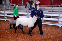 Lamb Shows