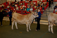 Steer Shows