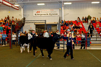 Steer Show Division 3