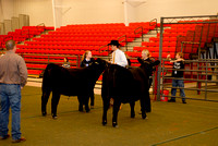 Beef Breed Sr. Showmanship