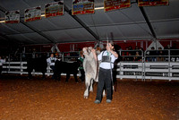 Beef Breed Showmanship