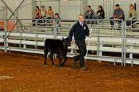 Beef Breed Show