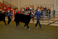 Steer Show Division 2