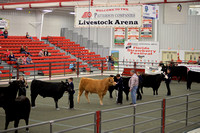 Youth Steer Showmanship