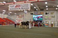 Dairy Youth Showmanship
